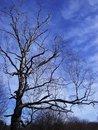 Free Lonely Tree Royalty Free Stock Photos - 3306638