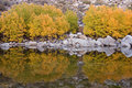 Free Aspens And Reflection Royalty Free Stock Photos - 3306768