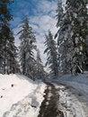 Free Winter Path Stock Image - 3307031