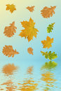 Free Multi-coloured Autumn Leaves Royalty Free Stock Photography - 3309497