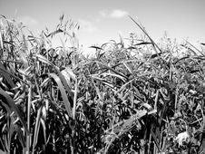 Free Aldinga Grassy Field 4 Stock Images - 3300074