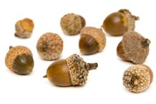 Free Acorns Stock Image - 3301161