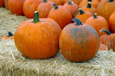Free Pumpkins Royalty Free Stock Image - 3301346