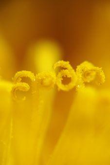 Free Dandelion Stock Images - 3301394
