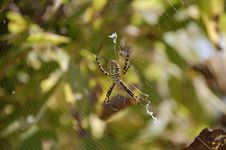 Free Garden Spider Stock Photos - 3301523