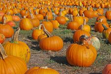 Free Pumpkins Forever Royalty Free Stock Image - 3301996