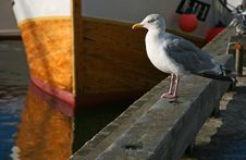 Free Seagull On A Pier Stock Photography - 3302142