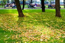 Free Autumn In A Park Stock Photography - 3302252