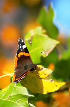 Free Butterfly Sitting On Leaves Royalty Free Stock Photography - 3302417