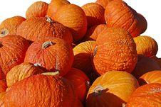Free Bumpy Pumpkins Royalty Free Stock Photography - 3302547