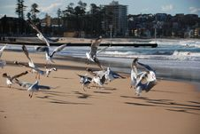 Free Seagulls In Flight Stock Images - 3303004