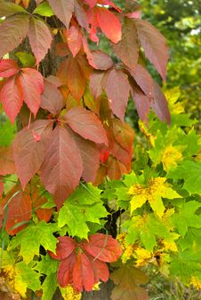 Free Multi-coloured Leaves Stock Photography - 3303332