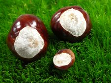 Free Chestnuts On Green Moss. Royalty Free Stock Photography - 3303667