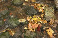 Free Yellow Autumn Leaves Royalty Free Stock Images - 3304209
