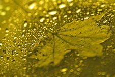 Free Leaf On Glass Royalty Free Stock Photography - 3305627