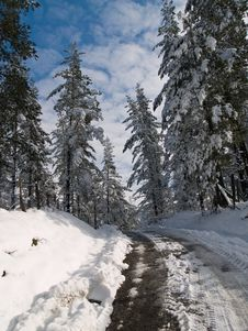Free Winter Path Stock Image - 3307031