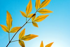 Free Golden Leaves Background Royalty Free Stock Images - 3307519
