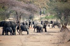 Free Elephants  Troop With Impalas Stock Photos - 3307533