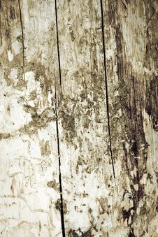 Free Wooden Background Stock Images - 3308194