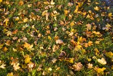 Free Autumn In The Park Royalty Free Stock Photos - 3308228