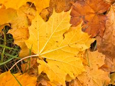 Free Autumn Leafs Stock Image - 3308281