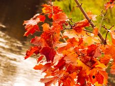 Free Reds Autumn Leafs Stock Images - 3308284
