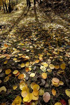 Free Yellow Fallen Leaves Stock Photos - 3308303