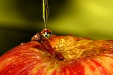 Free Red Apple Royalty Free Stock Photography - 3309127