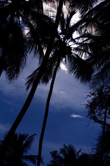Free Tropical Palm Tree Royalty Free Stock Image - 3309256