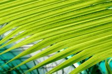 Free Coconut Leaf Stock Photography - 3309462