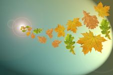Free Flying Multi-coloured Leaves Stock Photography - 3309502