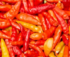 Free Red Chili Peppers Stock Image - 33007431