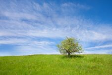 Free A Lonely Tree Royalty Free Stock Photos - 33009358