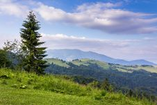 Free Tree On The Edge Of Clearing In Mountains Royalty Free Stock Photo - 33015765