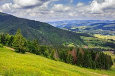 Free Coniferous Forest On A Steep Mountain Royalty Free Stock Photo - 33015785