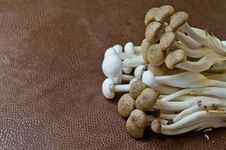 Brown Beech Mushroom And  White Crab Mushroom Royalty Free Stock Image