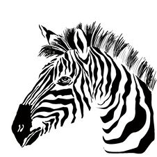 Free Portrait Of Zebra On The White Background Royalty Free Stock Image - 33027766
