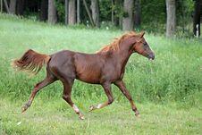 Free Horse Dancer Stock Photos - 33029613