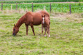 Free Horse Stock Photo - 33044940