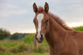 Free Young Horse Stock Images - 33044944