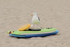 Free Seagull On The Beach Standing In Front Of Colorful Beach Toys Stock Photo - 33041920