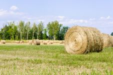 Free Hay Bales Royalty Free Stock Photography - 33043697
