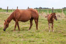 Free Horse Stock Image - 33044941