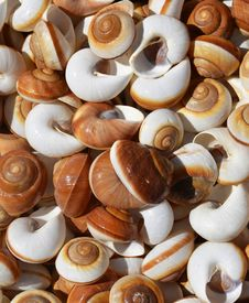 Free Spiral Sea Shells Background Royalty Free Stock Images - 33045009