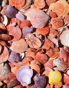 Free Flat And Colorful Sea Shells Background Stock Photos - 33045133