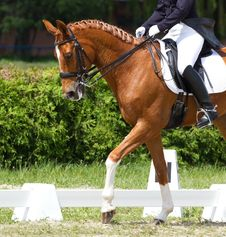 Free Dressage Horse Royalty Free Stock Photo - 33059105