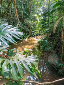 Free Jungle Stock Image - 33062071