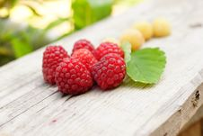 White And Red Raspberry. Royalty Free Stock Images