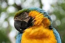Free Tropical Parrot. Royalty Free Stock Photography - 33086207