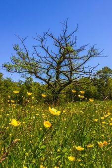 Free Springtime Royalty Free Stock Photography - 33091057